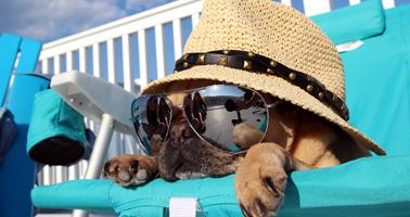 animaux_vacances