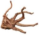 Tronc d'arbre et racines