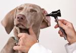 Hygiène des oreilles