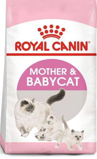 Tourteau Mother & Babycat