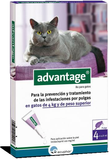Advantage 80 Chat (+ De 4Kg)