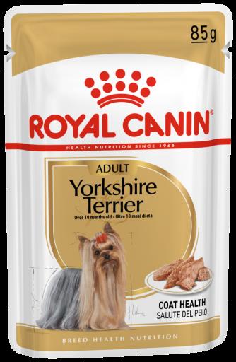 Yorkshire Terrier Adult